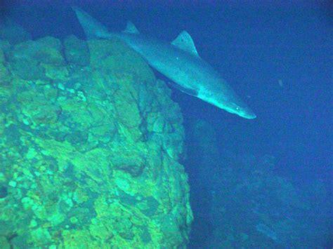 Shark at the Kasuga