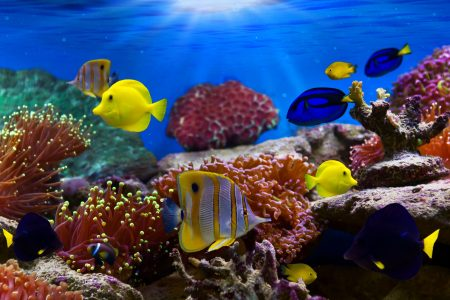 Soft corals and tropical fish share paradise