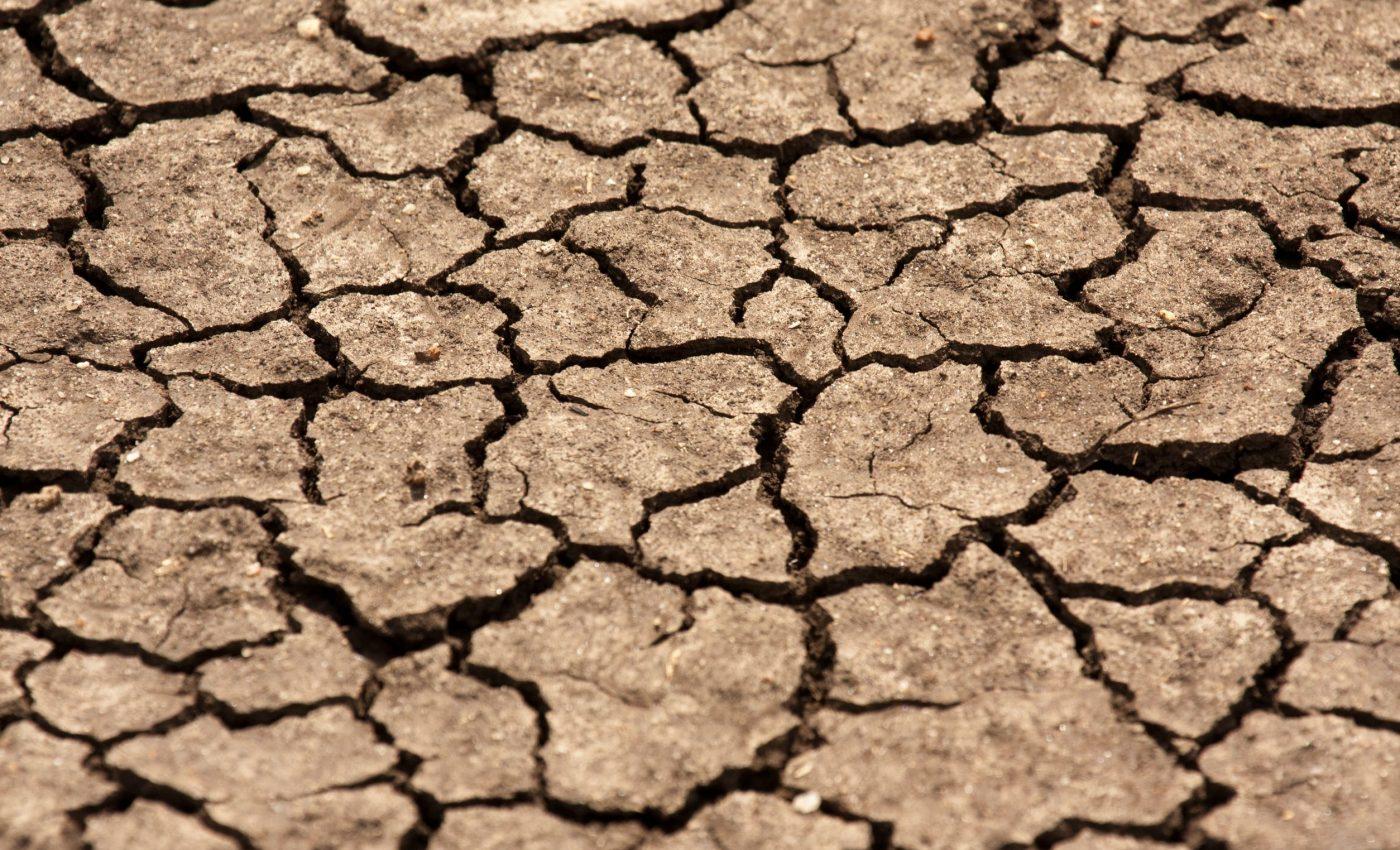 Drought on the Serengeti Plain