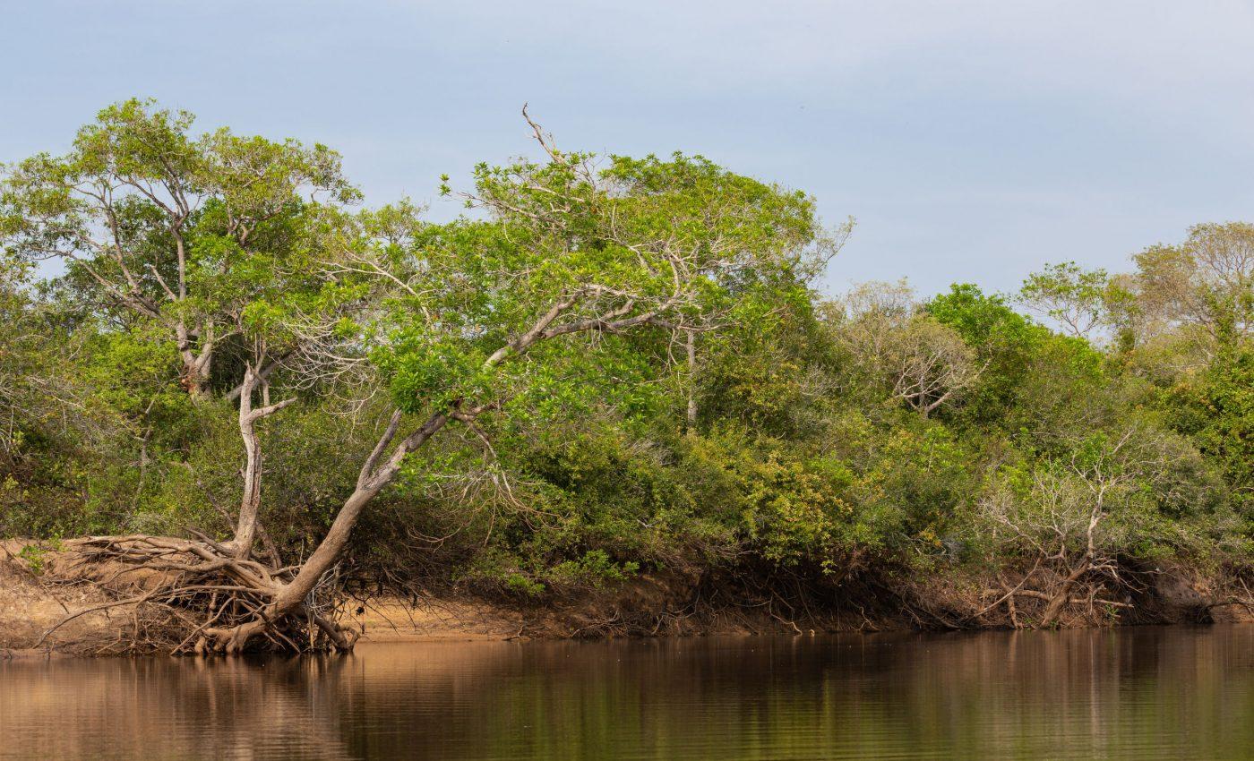 Mato Grosso Brazil