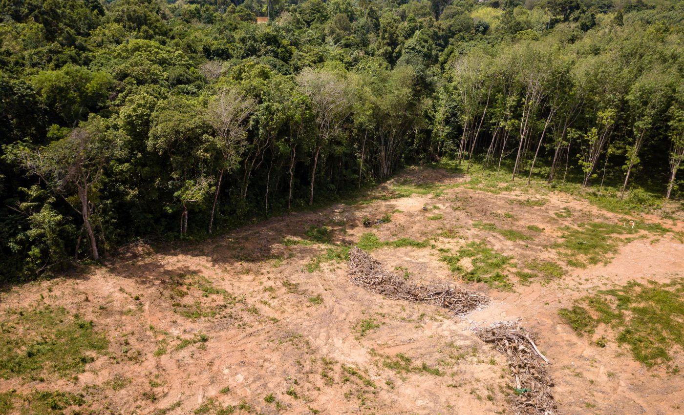 Deforestation in Mato Grosso Brazil