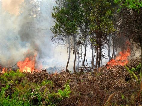 Fires across Southeast Asia