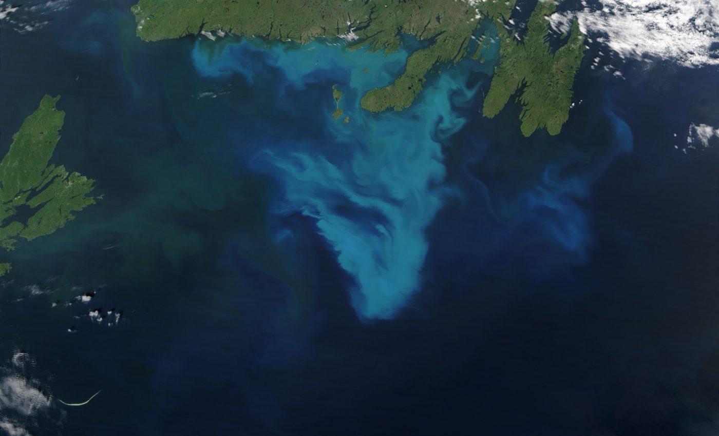 Phytoplankton bloom off Australia