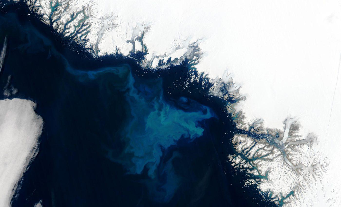 Phytoplankton Bloom off Greenland
