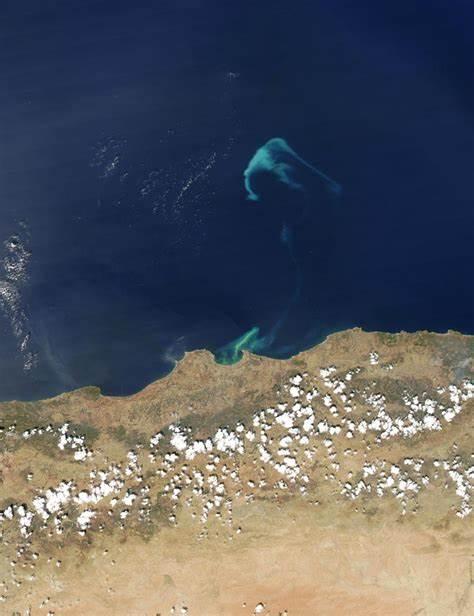 Phytoplankton Bloom off Algeria