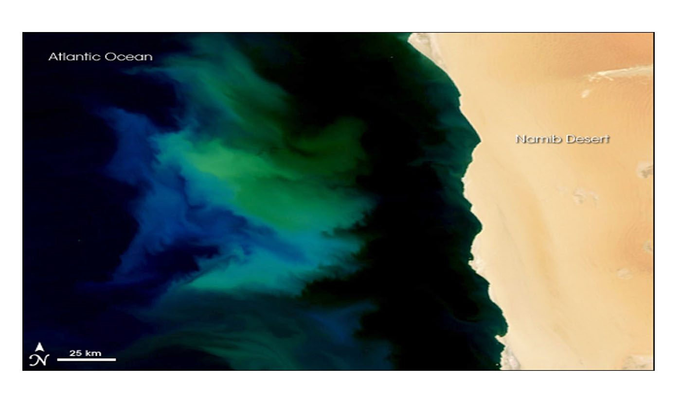 Phytoplankton Bloom off Namibia