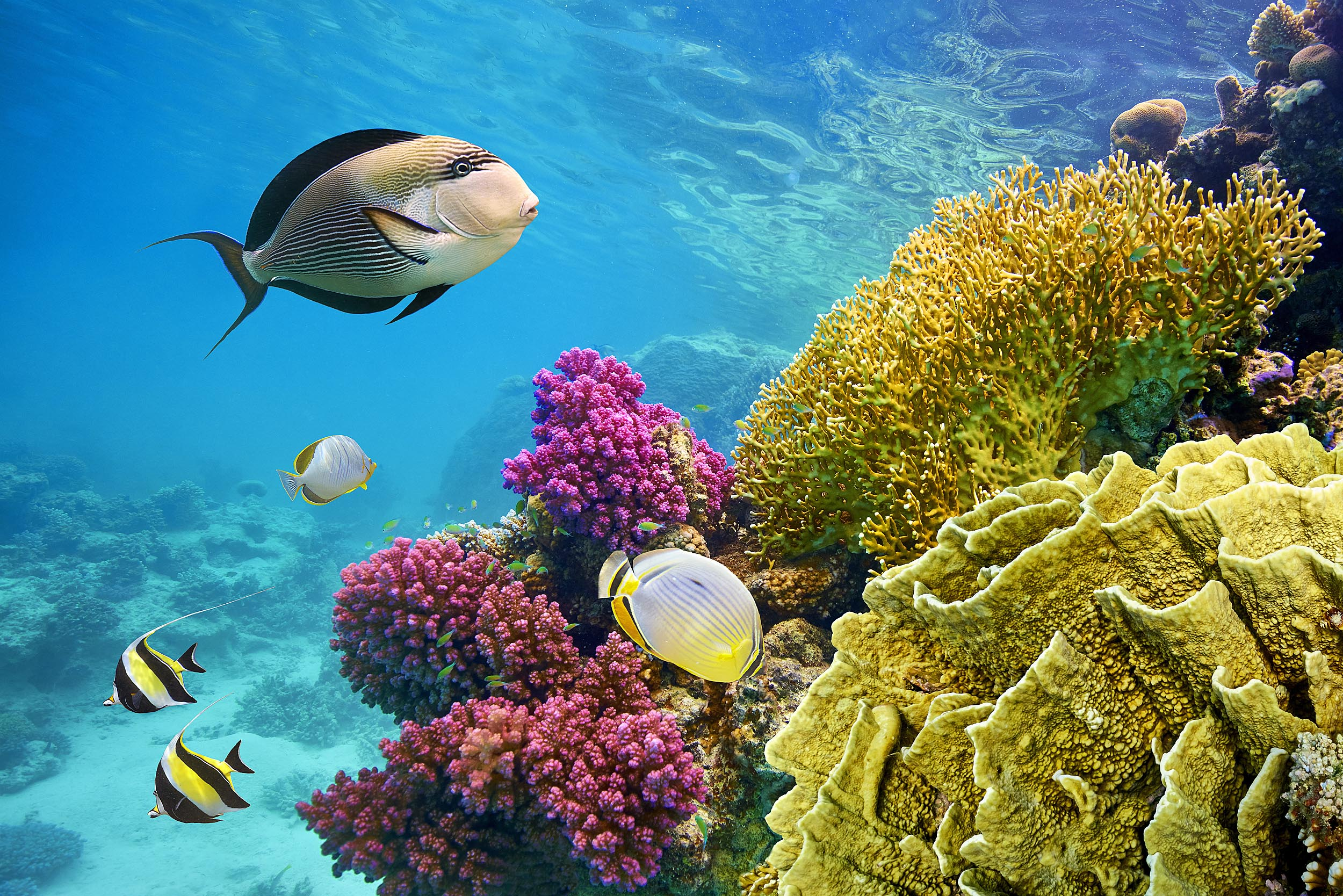 Coral reefs use sound to attract new animals