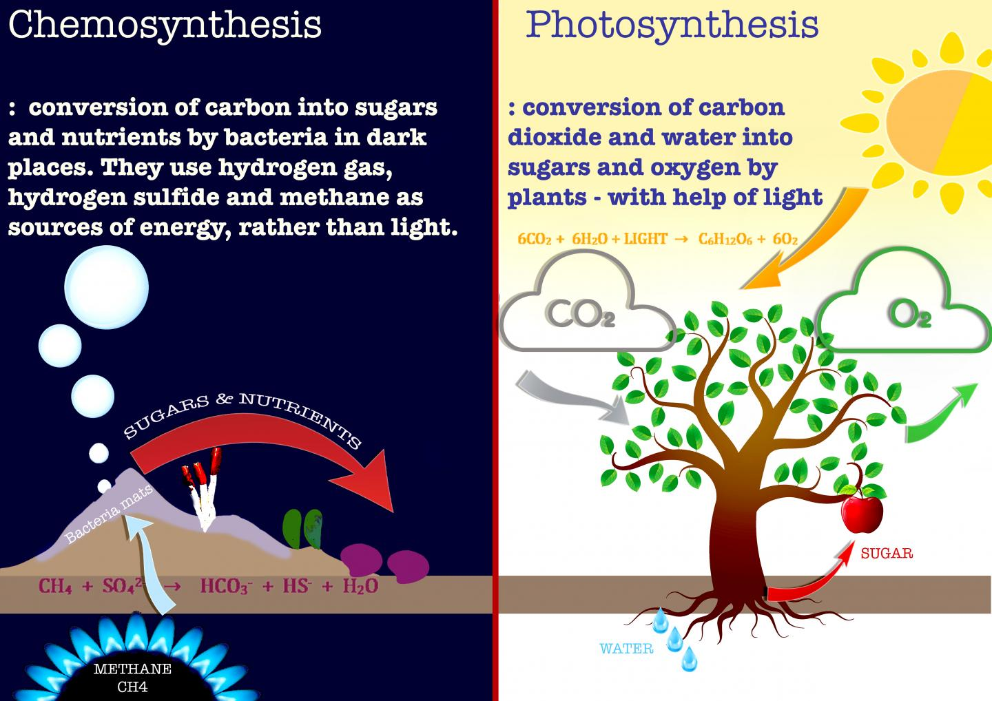 does chemosynthesis produce oxygen