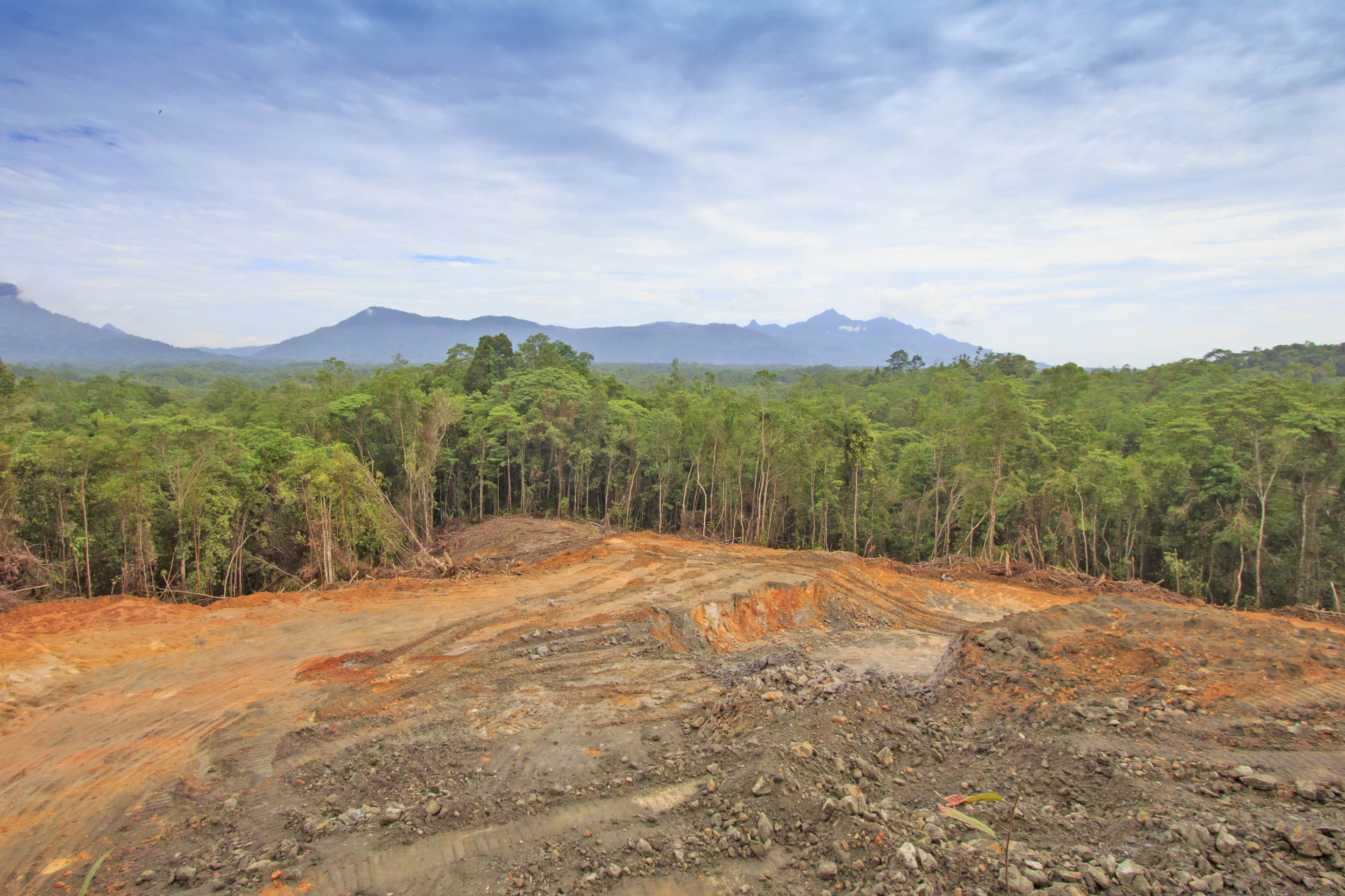 Impacts of tropical deforestation will be felt for many years to come