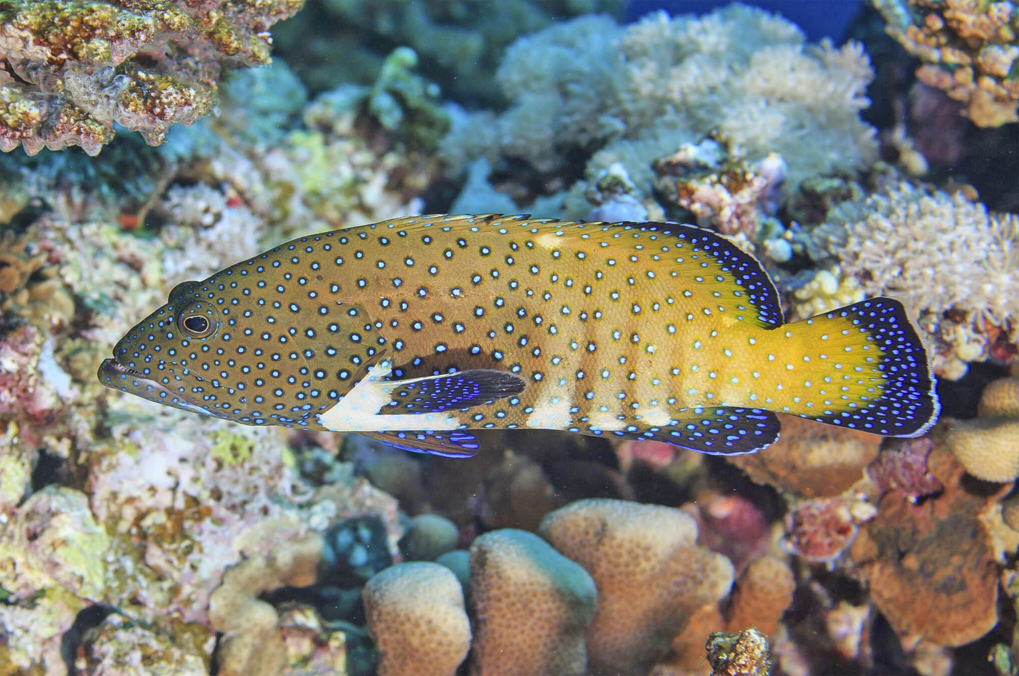 Conservation scientists protect fish at the island of Pohnpei