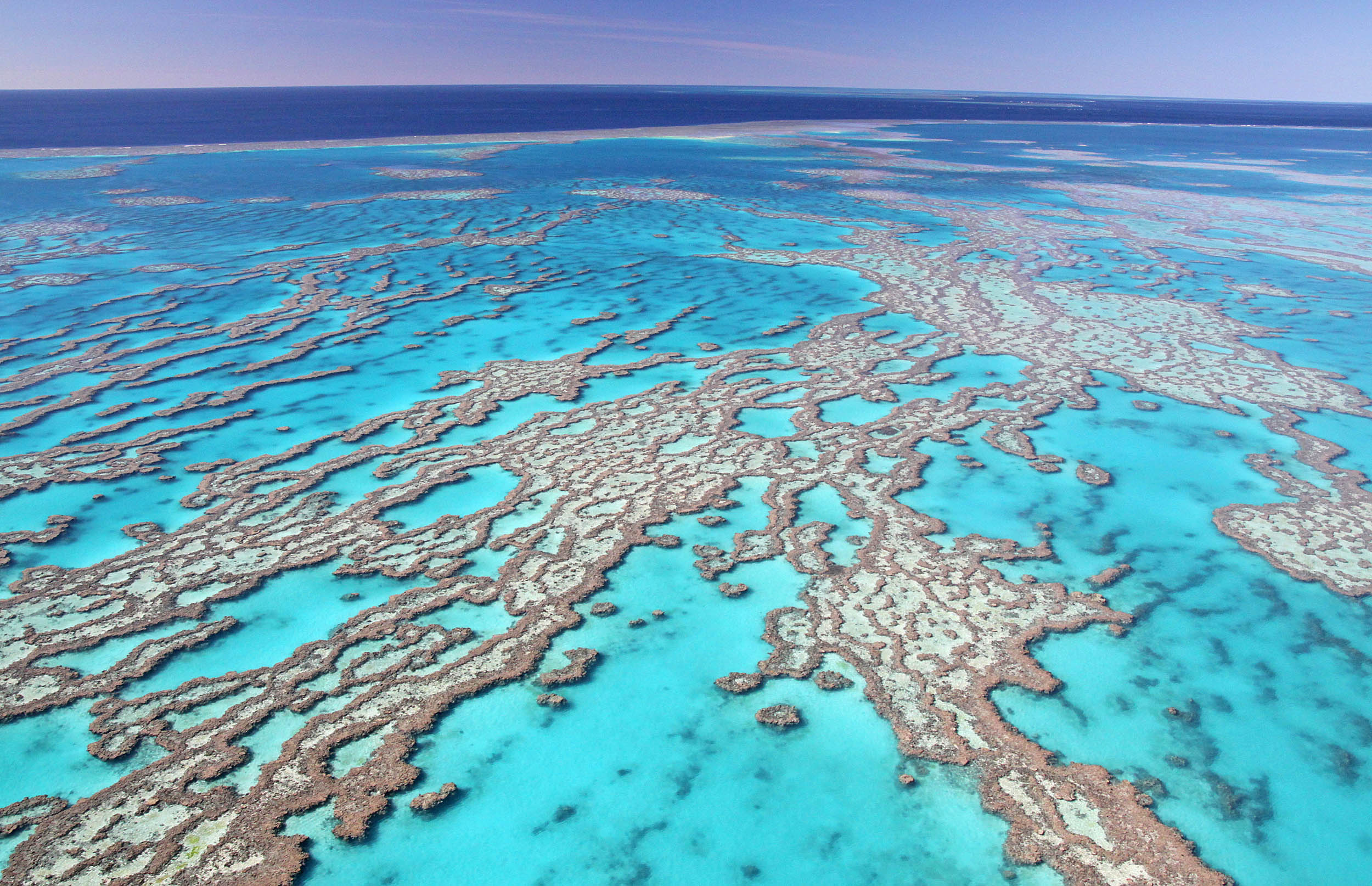 the great barrier reef essays - the great barrier reef the great barrier reef is a long chain of coral reef in the middle of the coral sea of the coast of northern australia it is the largest deposit of coral in the world and extends from about 2,010 km from point mackay queens land to the torres strait, between australia and new guinea.
