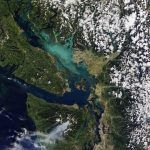 British Columbia phytoplankton bloom, August 16, 2016