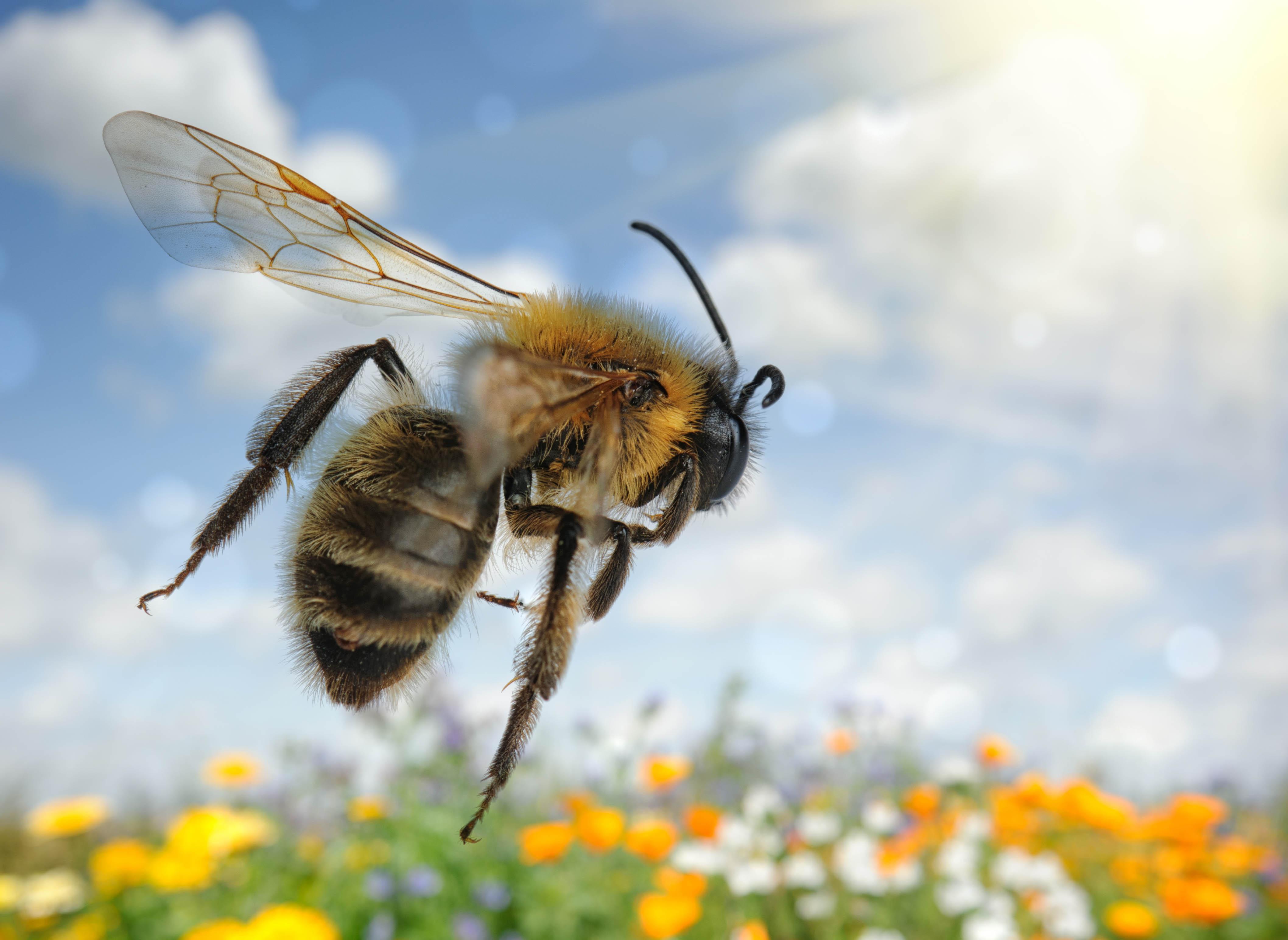 Seven bee species put on the endangered species list ...