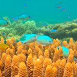 Blue-green damselfish