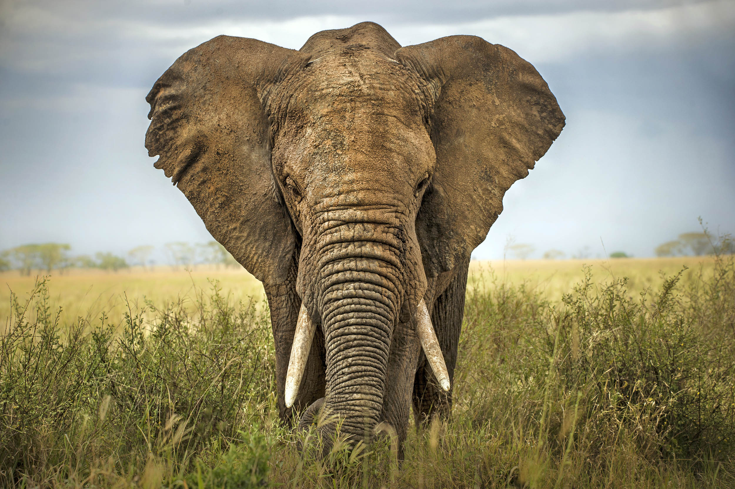 a study the mammals on the planet earth How do we know earth's climate has changed  to create entirely new survival challenges for the lone hominin species on the planet, and many other organisms as.