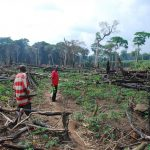 deforestation in the central Congo Basin