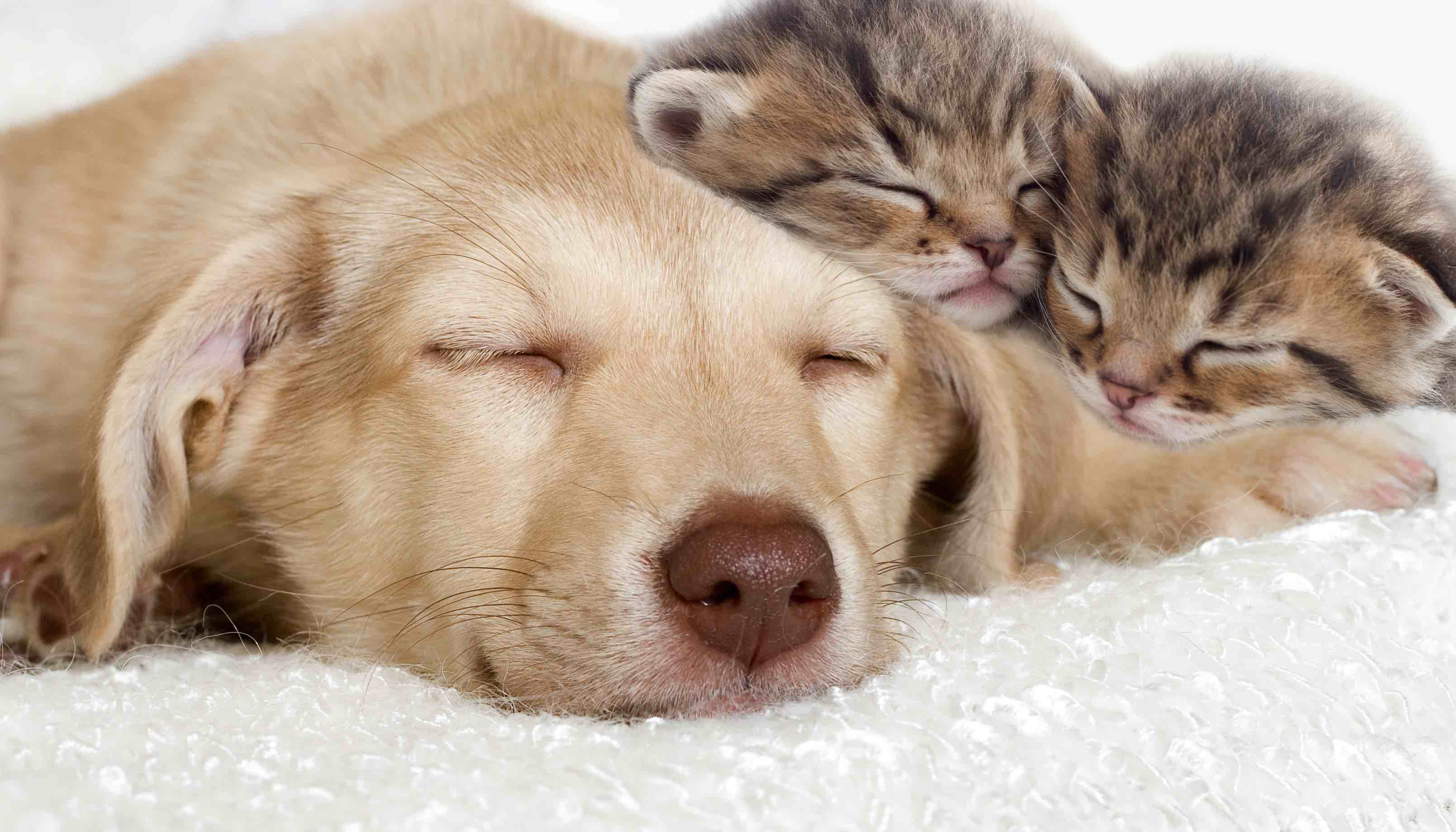 New research explains dog dreams. All pet owners believe they have a special relationship with their animals. We love to watch our dogs running, moving and barking in their sleep.