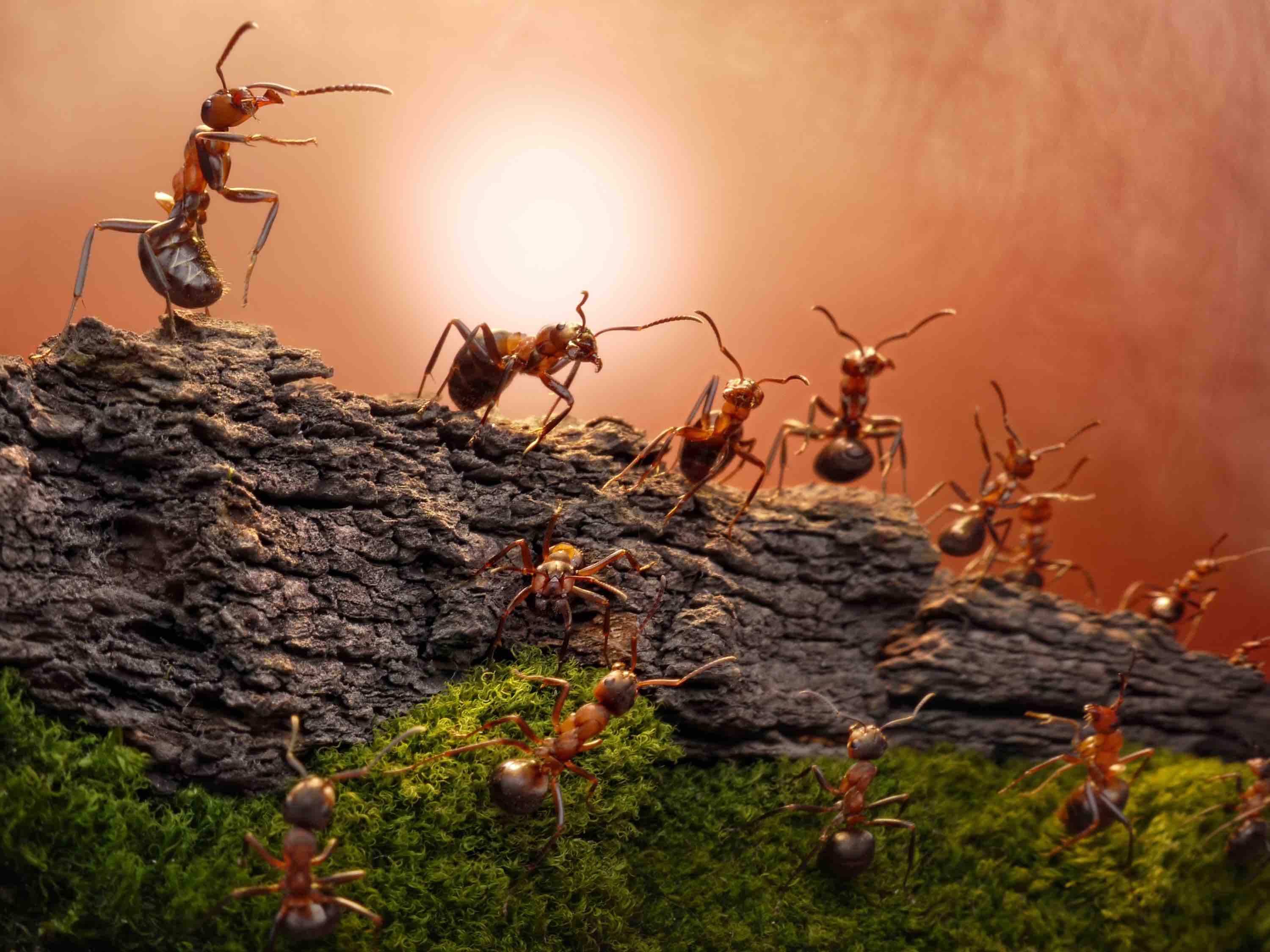 Ant DNA research suggests that the Americas may have been connected millions of years earlier than previously thought.