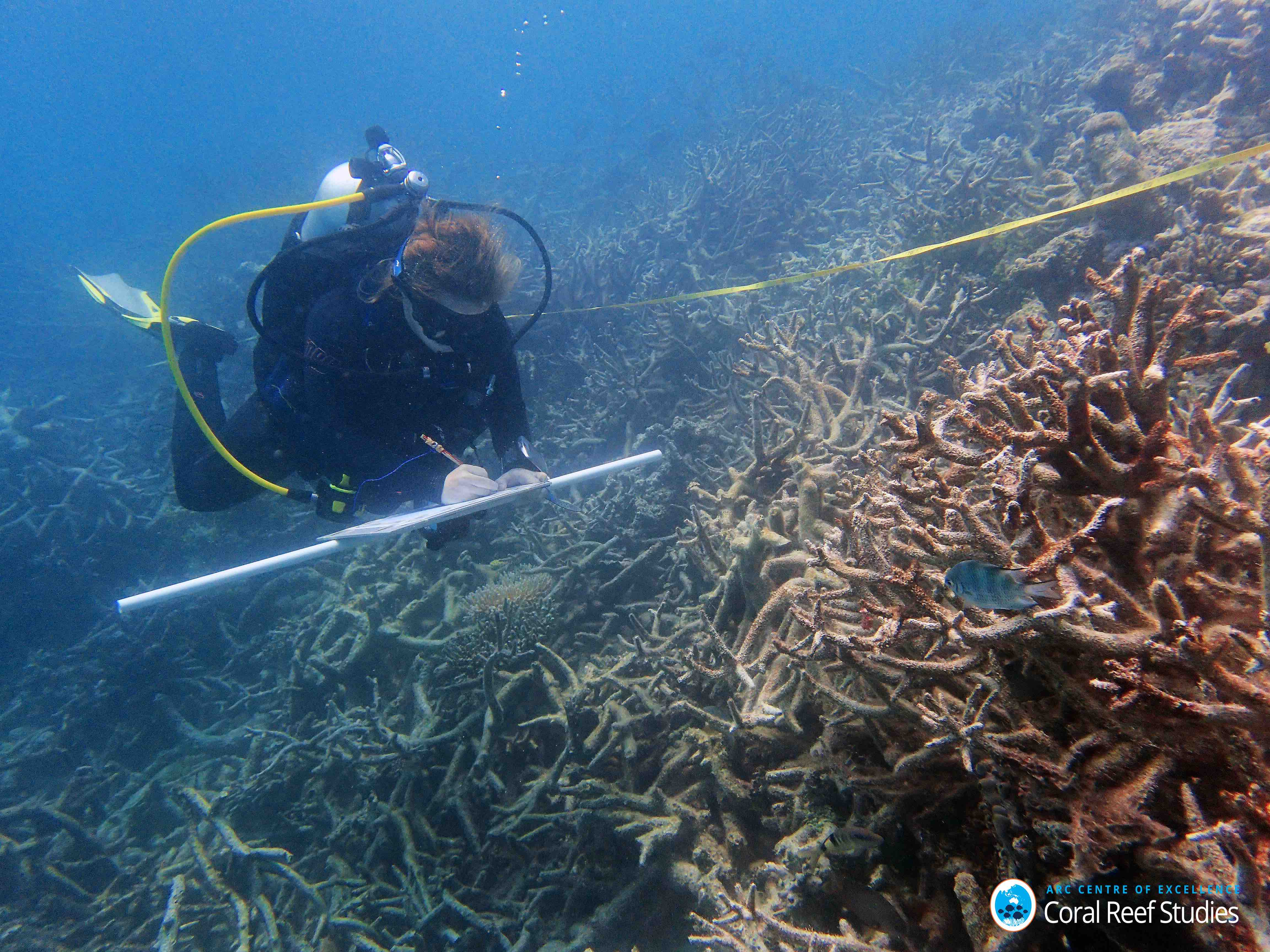 Damage to the Great Barrier Reef has been assessed after the worst coral bleaching event ever recorded.