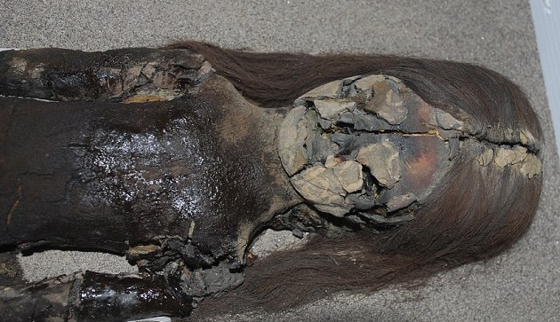Chinchorro Chilean mummies were reduced to slime by increasing humidity. Chile needs help in preserving some of the oldest mummies in the world. Credit Vivien Standen.