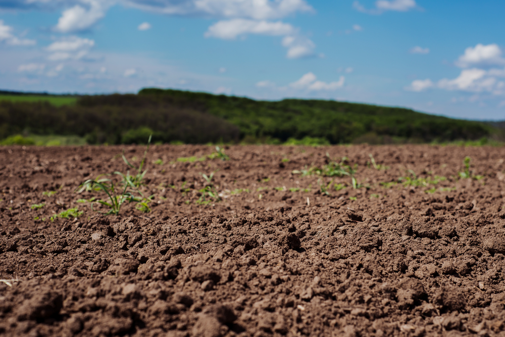 Soil causes climate change, states a shocking report, describing soil's potential to become a major source of carbon dioxide if land use remains constant.