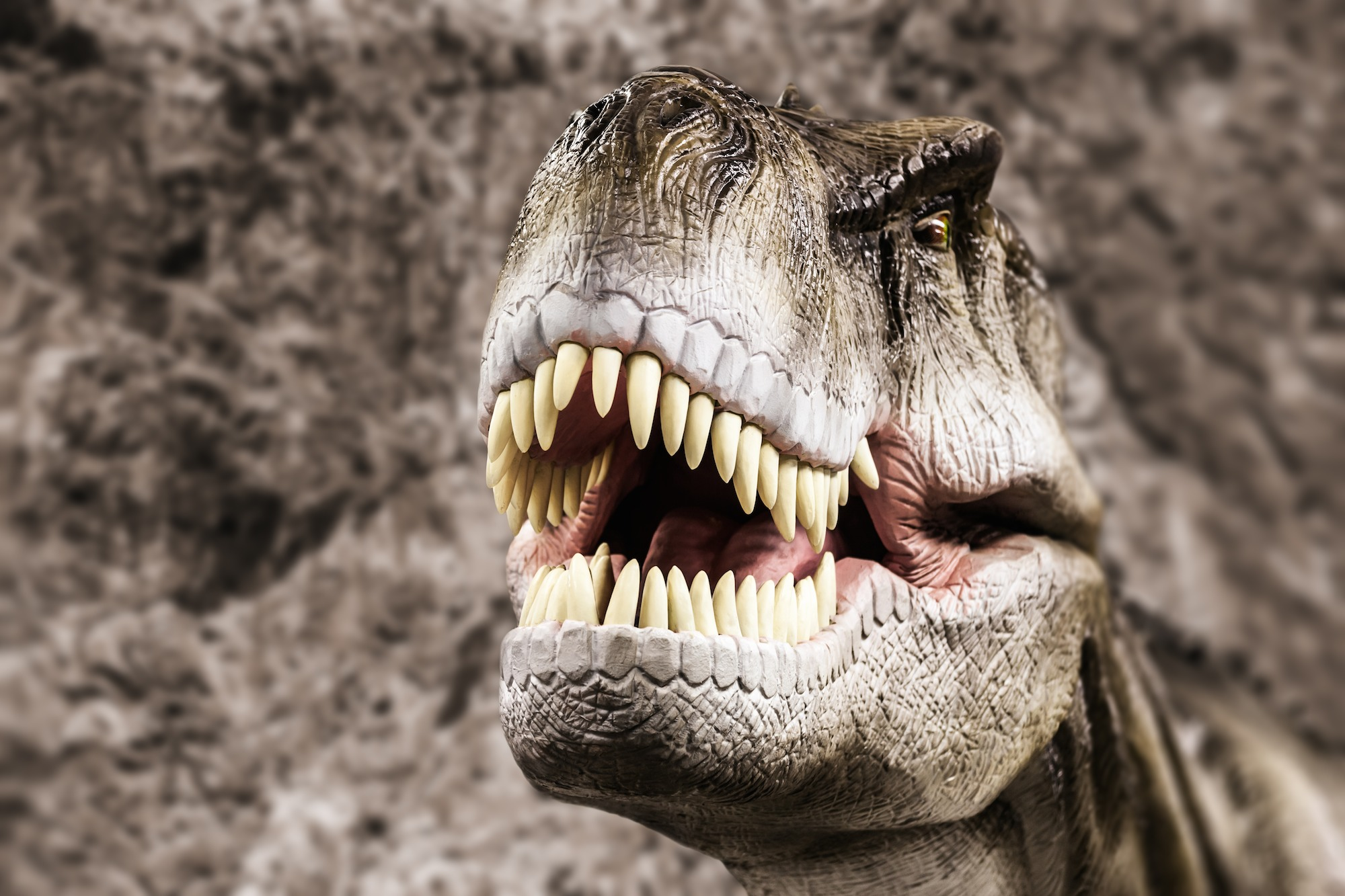 Hollywood smiles created by our reptilian ancestors: scientists believe the attractiveness of a nice smile may go back to a time before mammals.