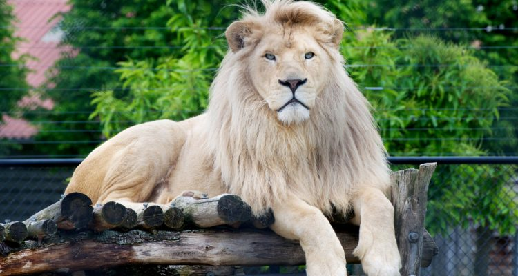 Wild animals lead longer lives in zoos! Most animals life expectancy is longer when kept in the safety of zoos, according to a new report.