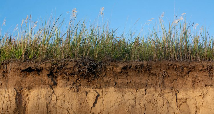 Early Life on Earth in the soil