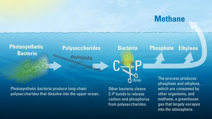 marine methane paradox