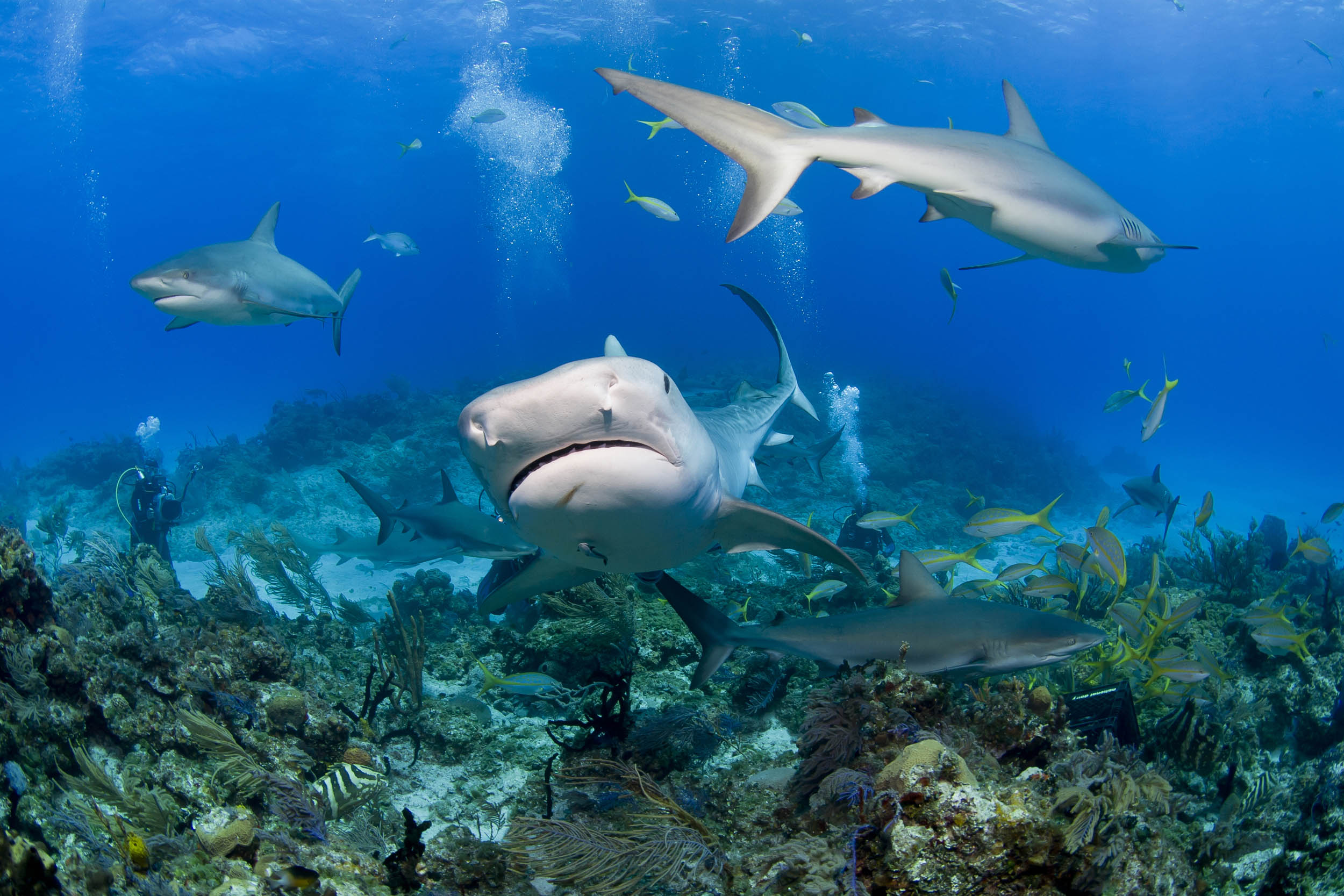Kiribati establishes shark sanctuary