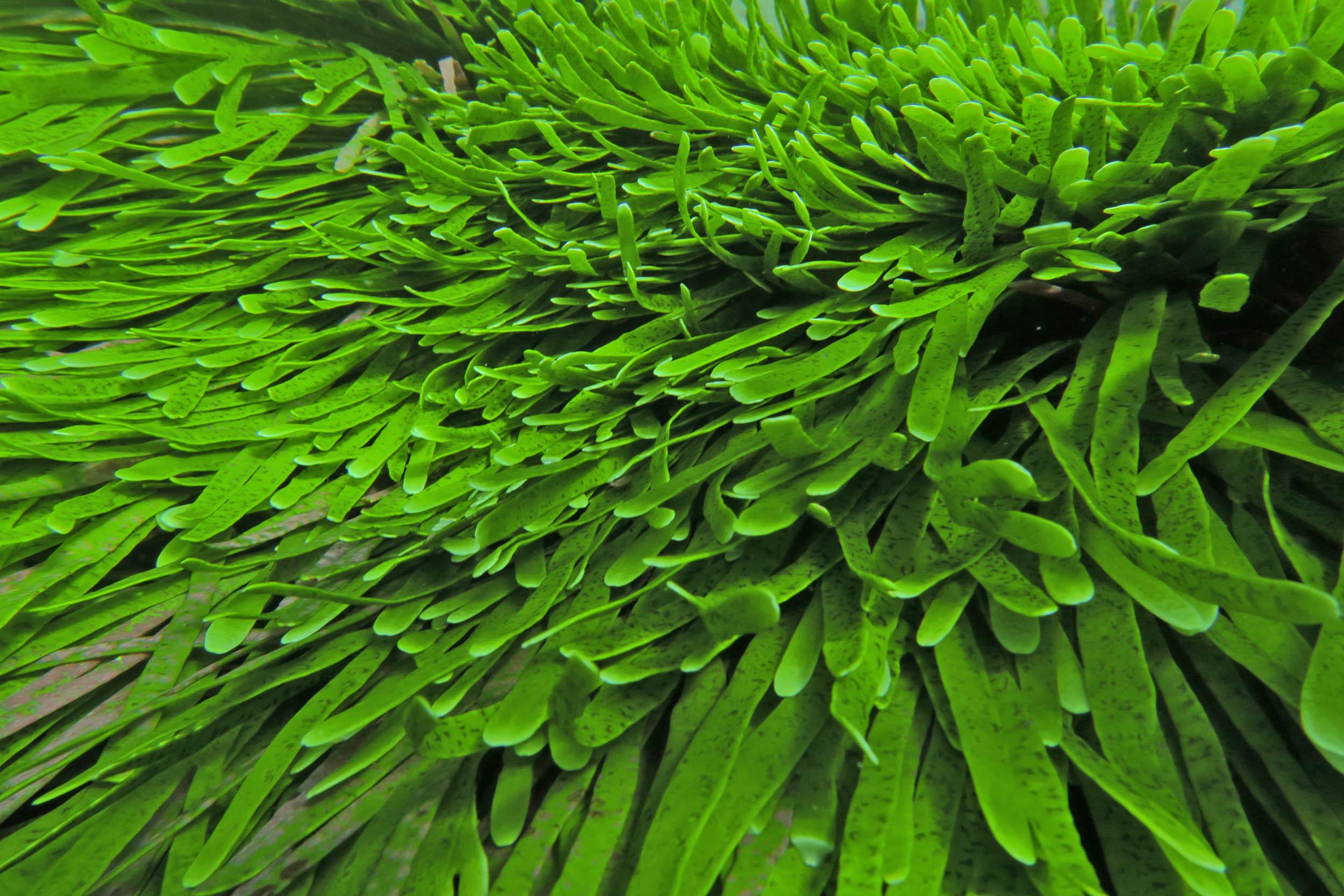 Ocean acidification will harm seagrass