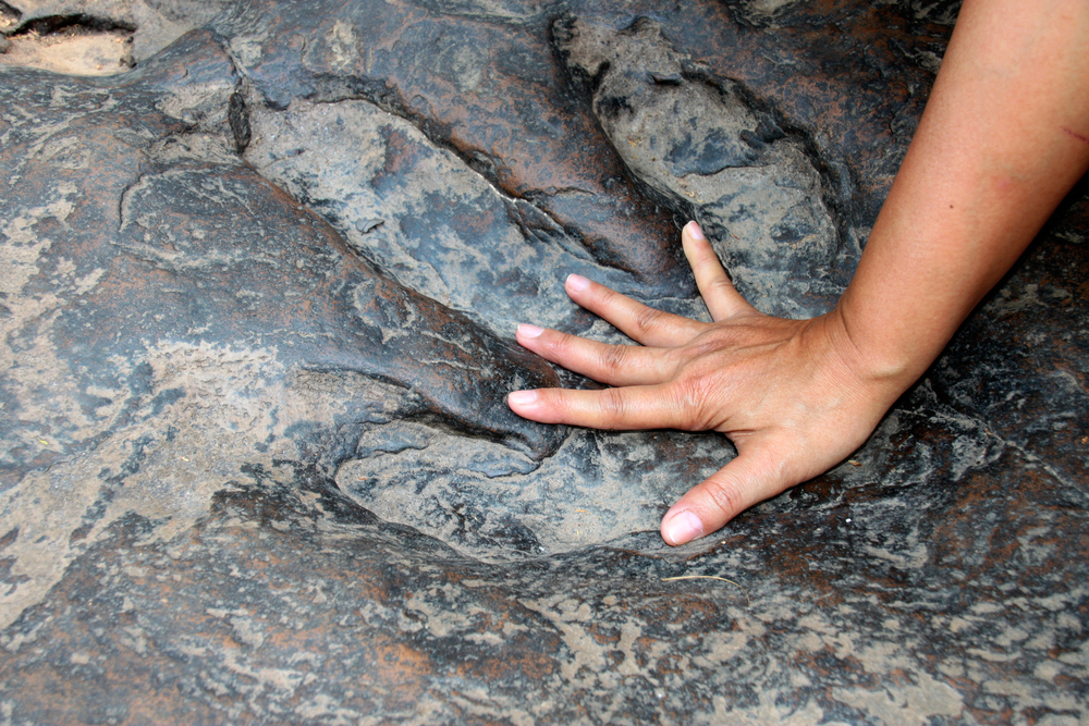 Long before dinosaurs roamed the Earth, fossilized footprints show amphibians may have been rulers of the planet.