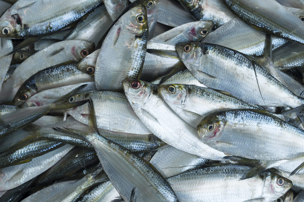 solutions to overfishing People often assume that local population size is the main driver of overfishing -- but our research shows that access to global markets and seafood dependence are more important, and provide.