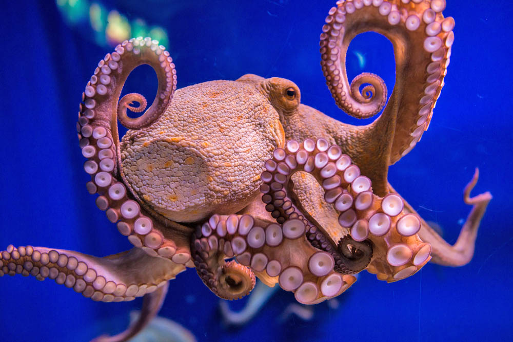 Octopus suction cups