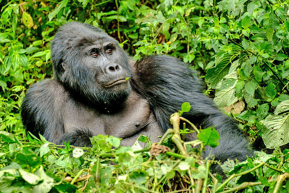 animals on the verge of extinction Most species of wild animals in africa are either endangered or they may go extinct in the near future  the former is on the brink of extinction, while the latter.