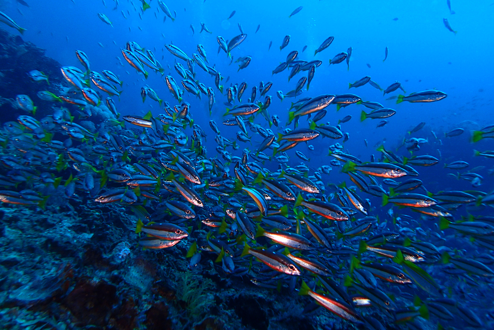 Marine incentives that encourage smarter use of the oceans and protect ecosystems have been effective, according to a new analysis.