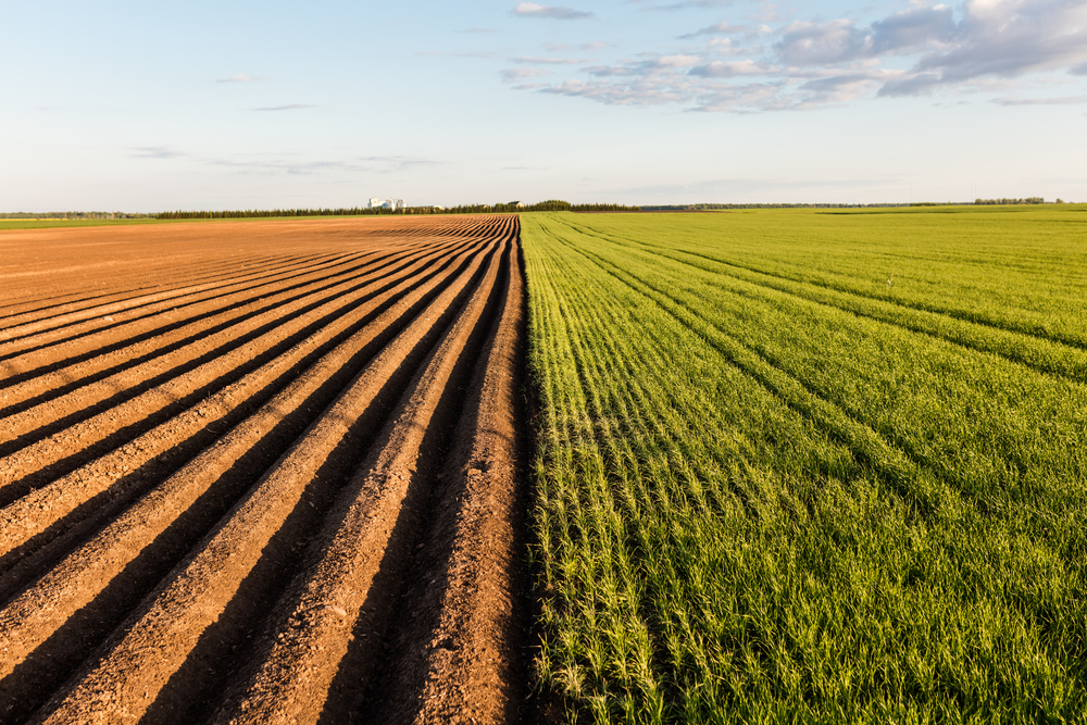 The alternative photosynthetic process used by drought-resistant plants could be used to as a food source during severe drought conditions.