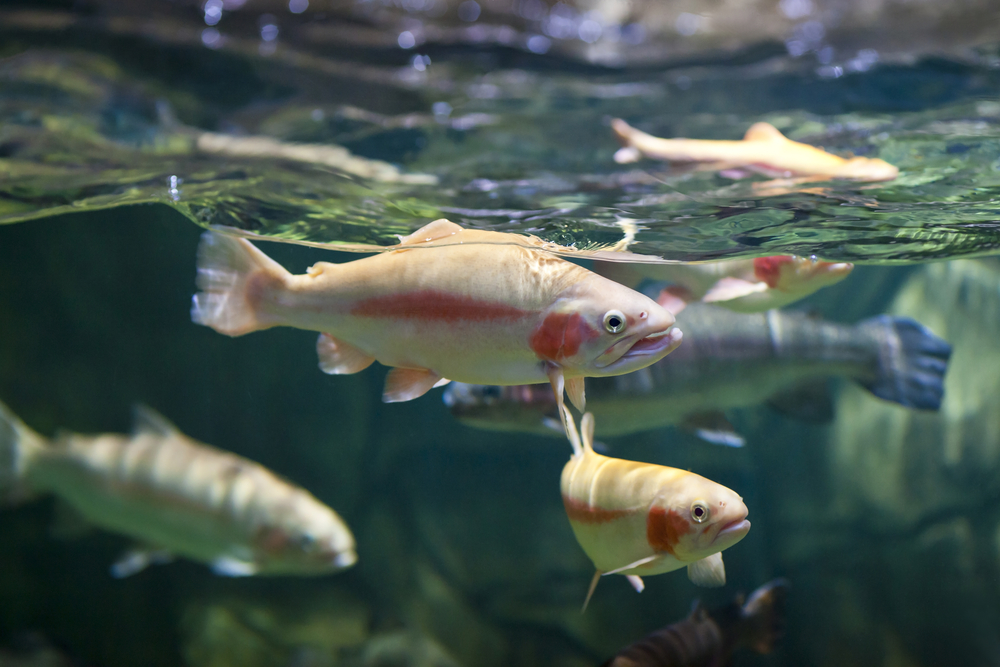 Scientists predict that one third of freshwater species are likely to lose more than half of their range due to climate change.