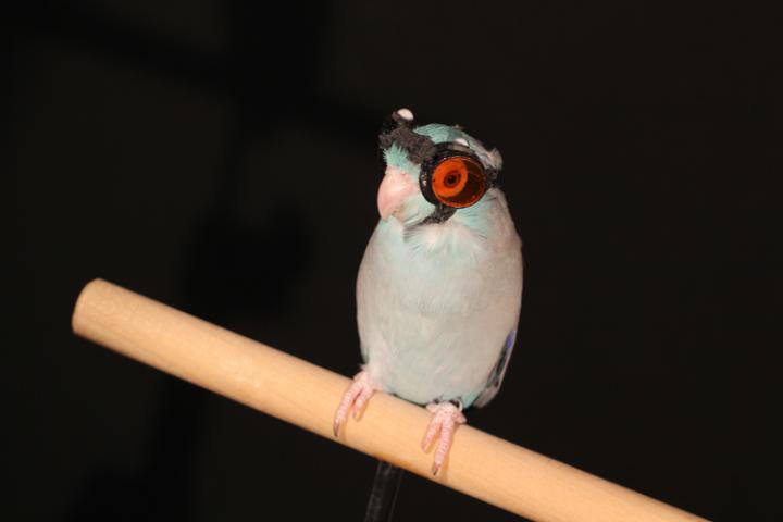 parrotlet flight reveals faults