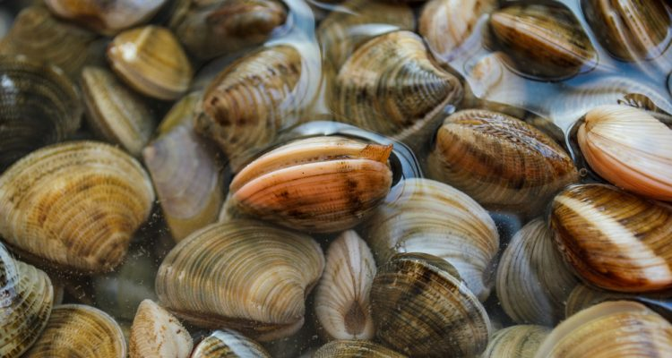 Clams don't speak, so what can they tell scientists about the ocean? A lot, it turns out – the sea's history is written in clam shells.