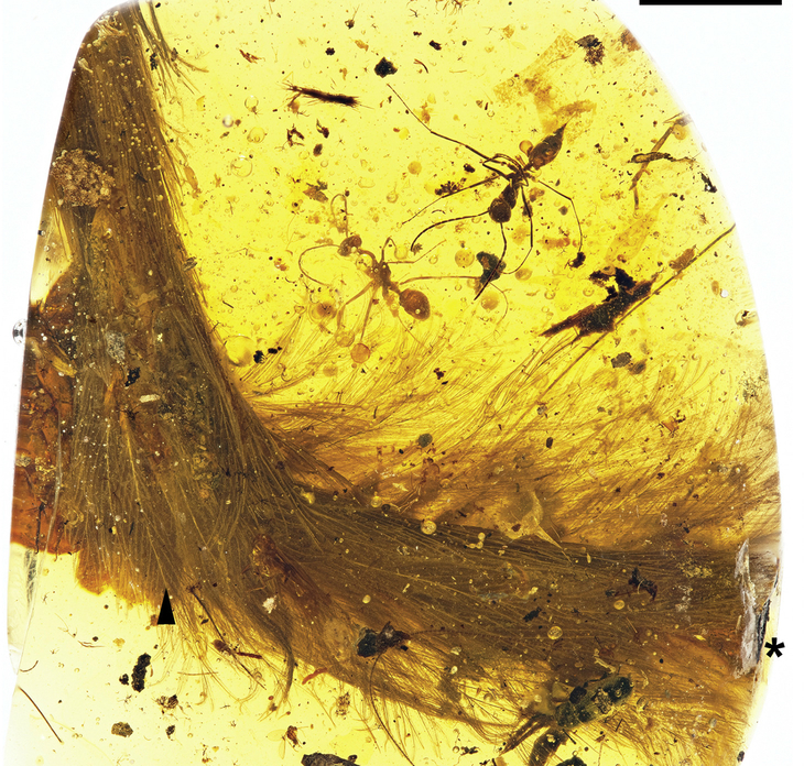 A piece of amber purchased at a market in Myanmar has been found to contain an actual dinosaur tail, according to scientists.