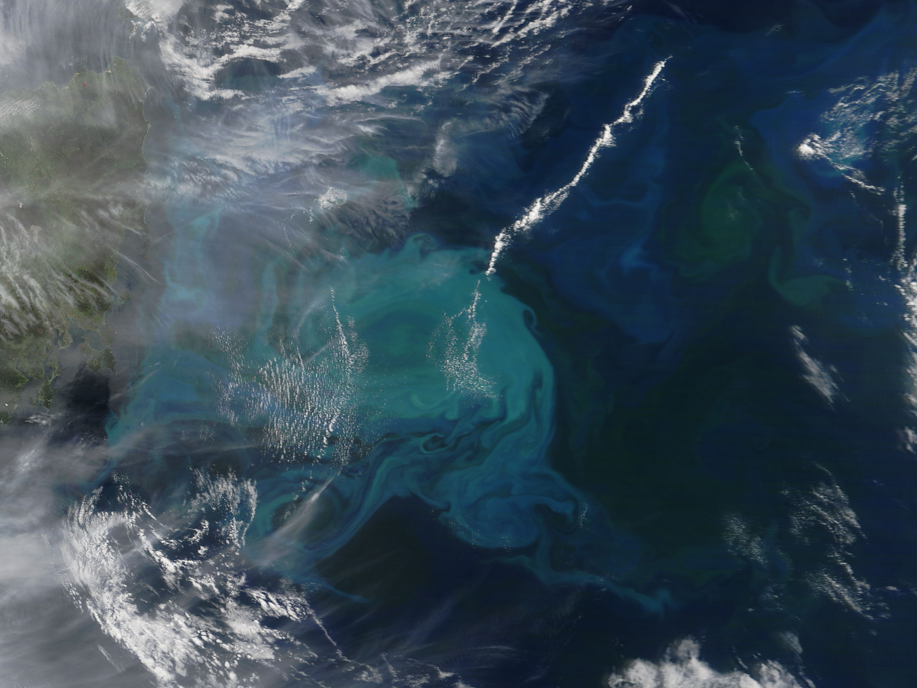 Massive phytoplankton bloom off the coast of Tasmania