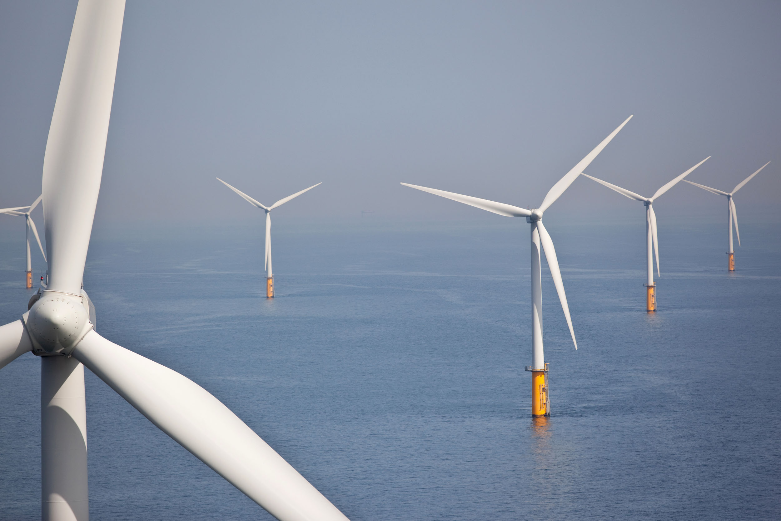 Offshore wind farms pose a risk to birds of prey