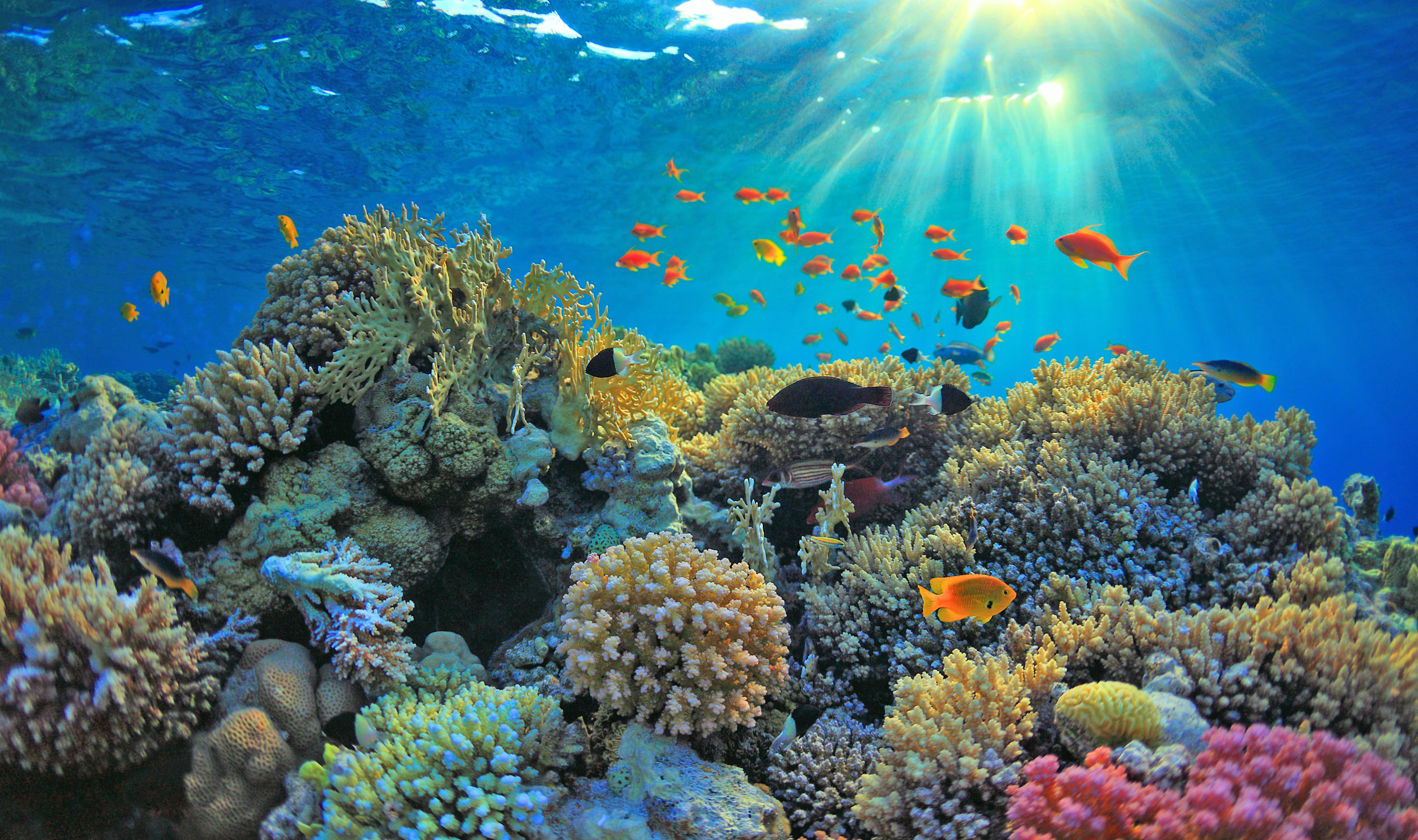 The CORAL project: A new view of coral reefs