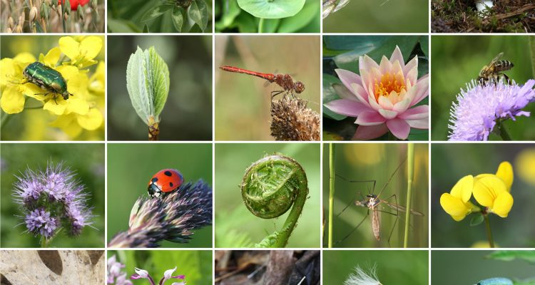 Why is species diversity greater in the tropics at the poles?