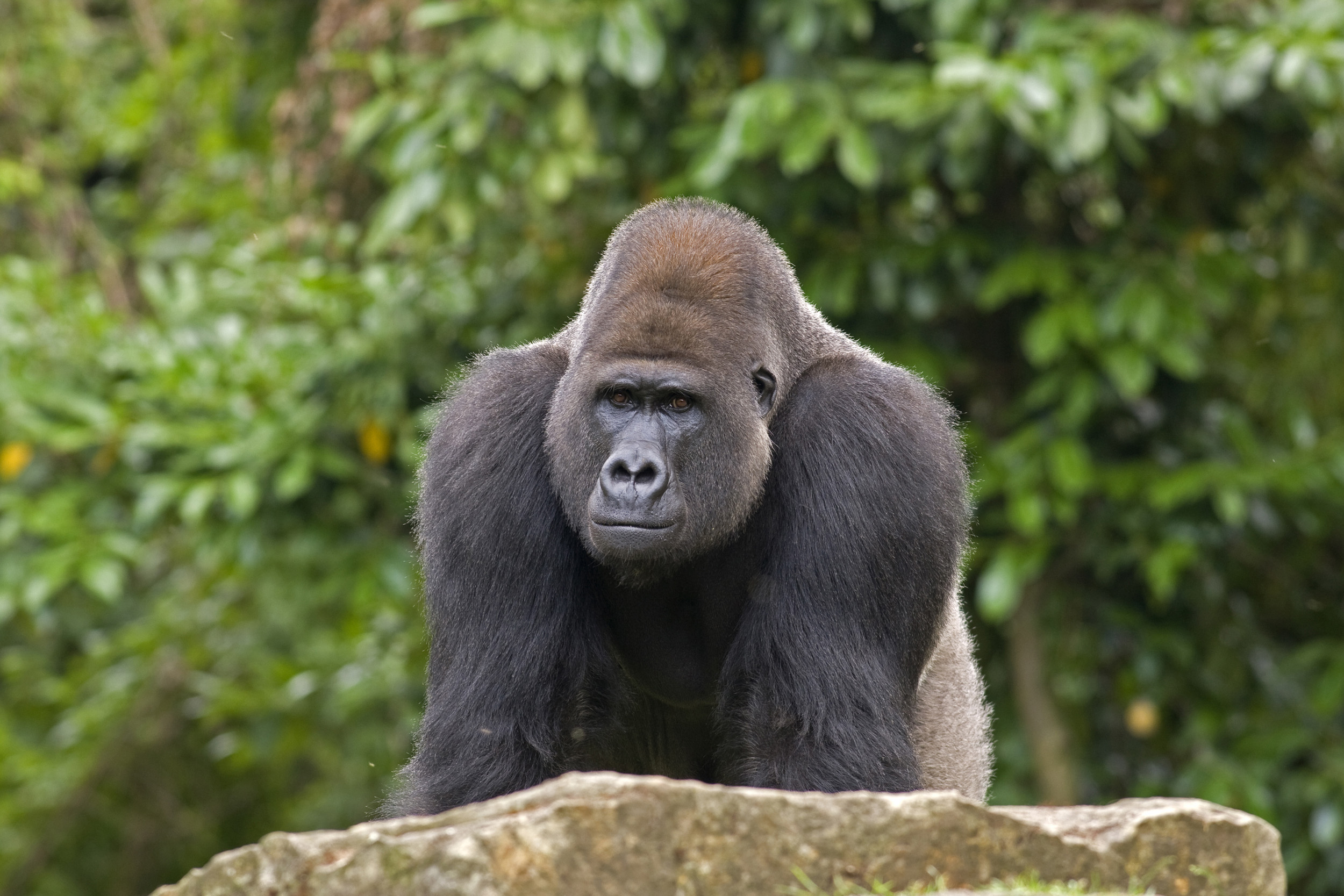 Scientists find a gray zone of speciation among animals