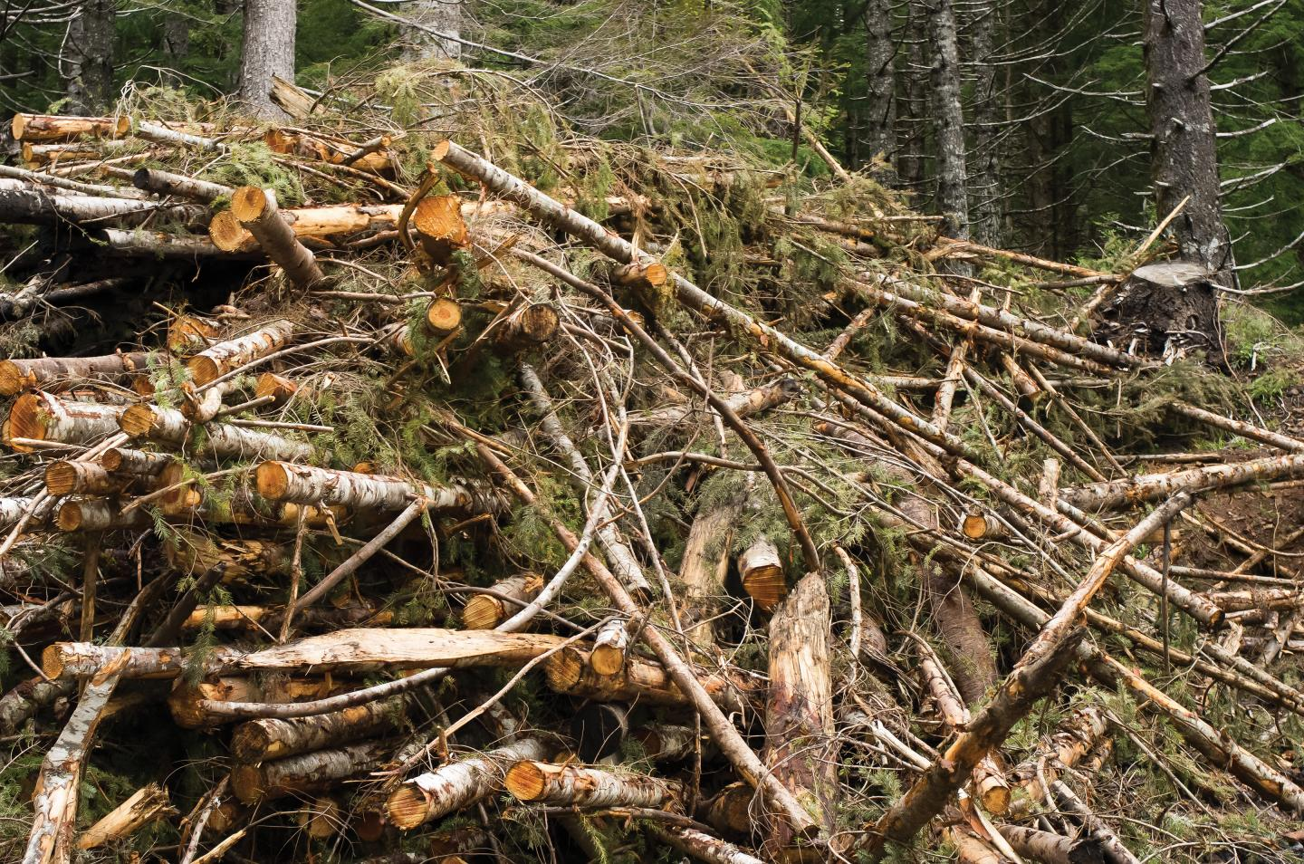 Forest biomass processing plants are too expensive for most communities