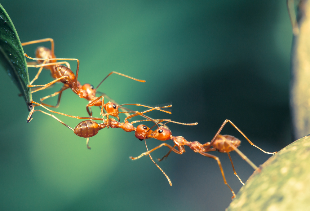 Scientists have discovered more than 130 new species this year, including 43 new ant species.
