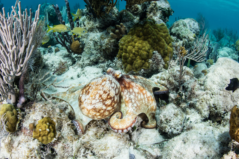 Caribbean coral reefs seem to have found a new hero in the fight against algal overgrowth: smaller urchins and finger-sized parrotfish.