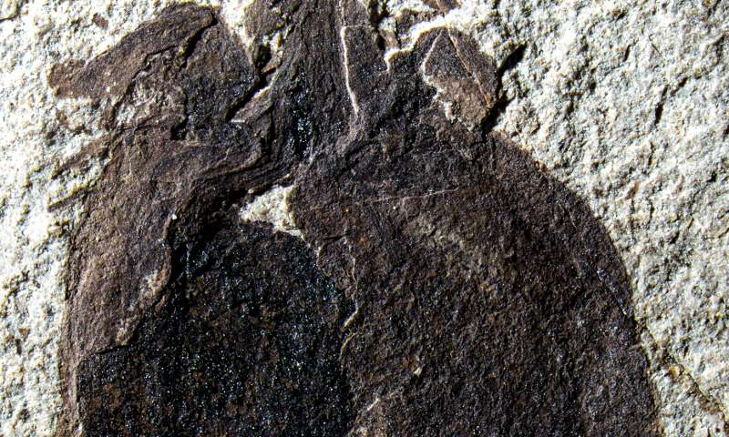 New research has been published in the journal Science outlines the discovery of a 52 million year-old fossilized fruit in South America.